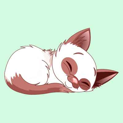Сколько кошки спят в сутки и о чем говорит выбранное для сна место