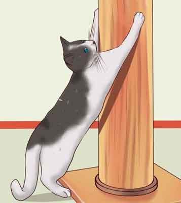 Когтерезка для кошек - специальные ножницы для стрижки когтей: правила выбора и использования когтереза