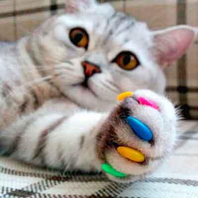 Наклейки на ногти для кошек. Накладки на когти для кошек: польза или вред?