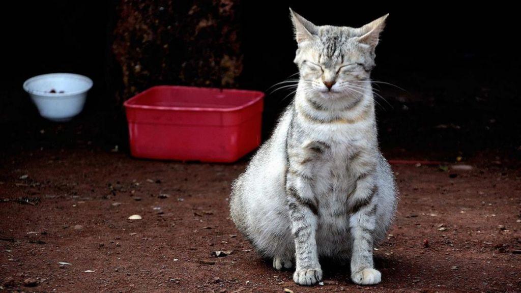 Если понос у беременной кошки.jpg