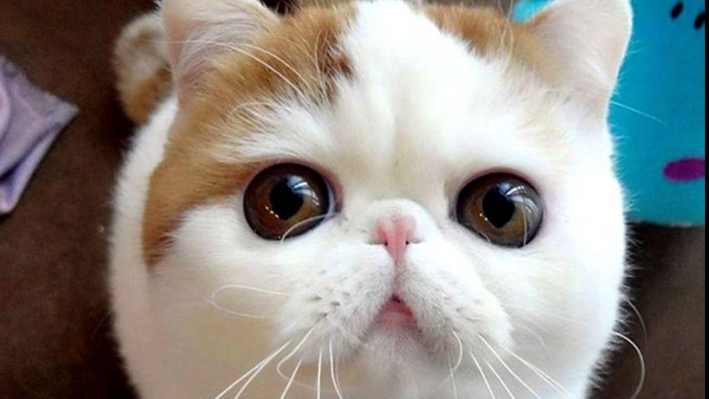 Котята с большими глазами порода фото