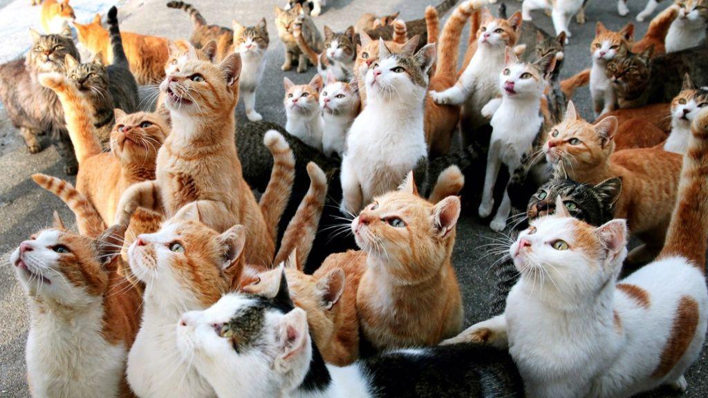много кошек во сне.jpg