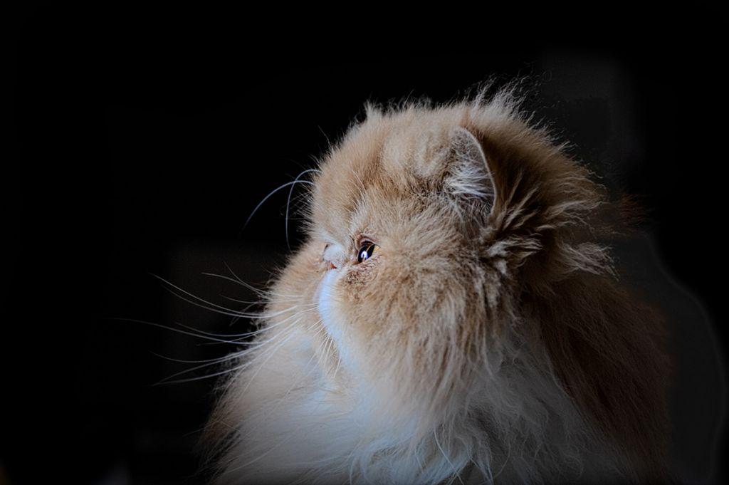попадает коты экстремалы фото как-то