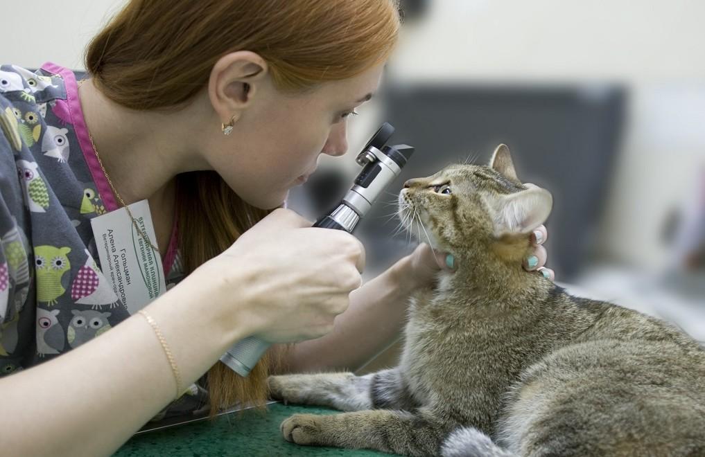 Профилактический осмотр помогает выявить глазные болезни на ранней стадии