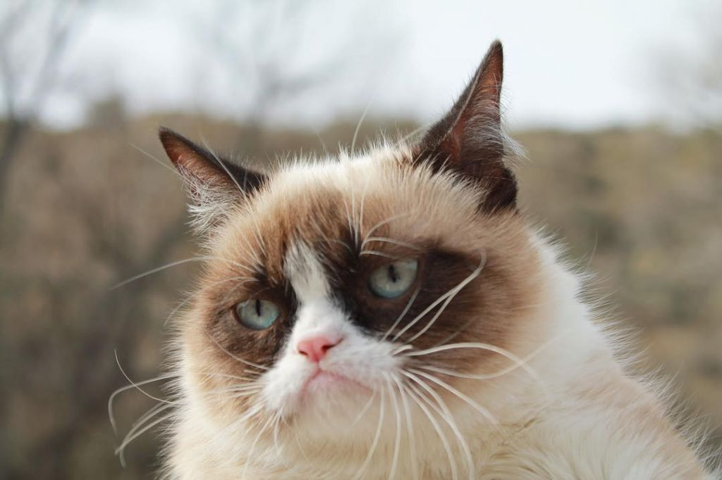 no grumpy cat quickmeme - 1024×682