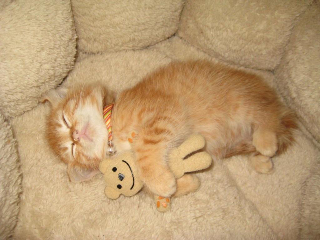 Картинки спящих котят смешные, для рукодельницы скрапбукинг