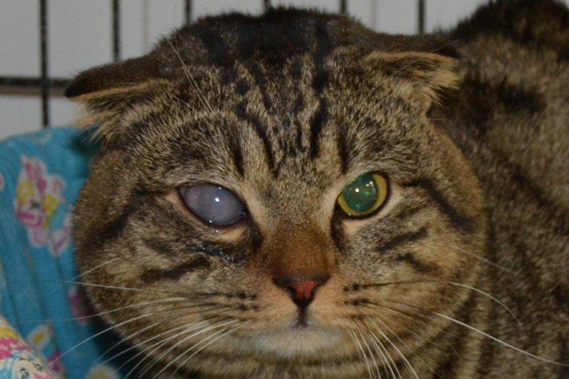 Более точно определить причину помутнения и назначить лечение поможет ветеринар-офтальмолог
