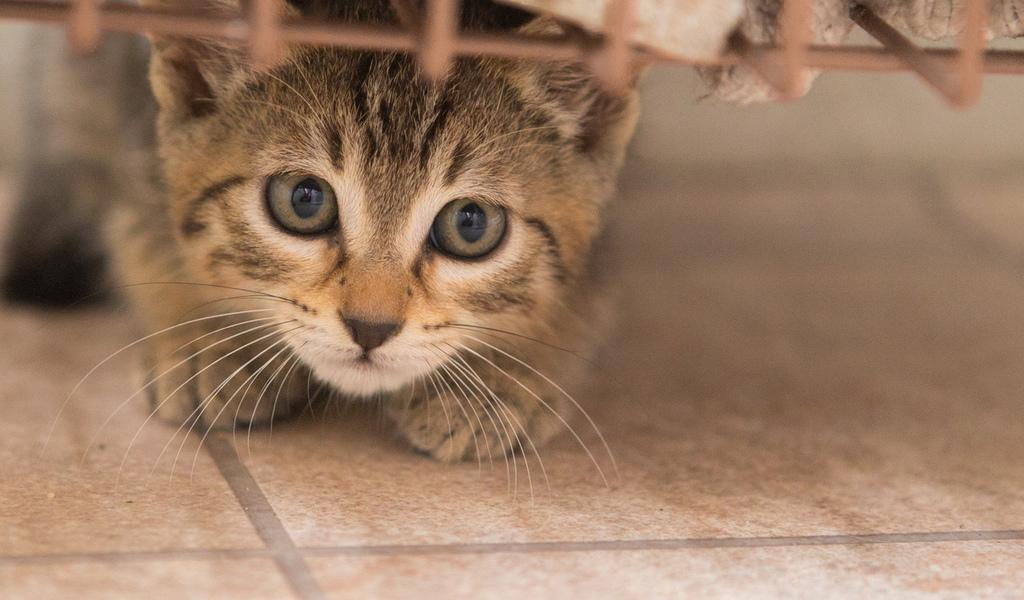 Кошка забилась в укромное место.jpg
