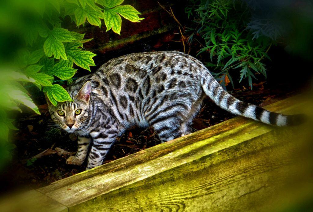 Кот гуляет на природе.jpg
