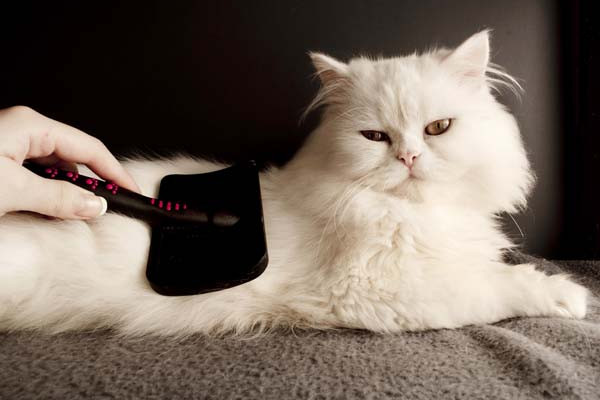 cat-brushing-tips-TN.jpg