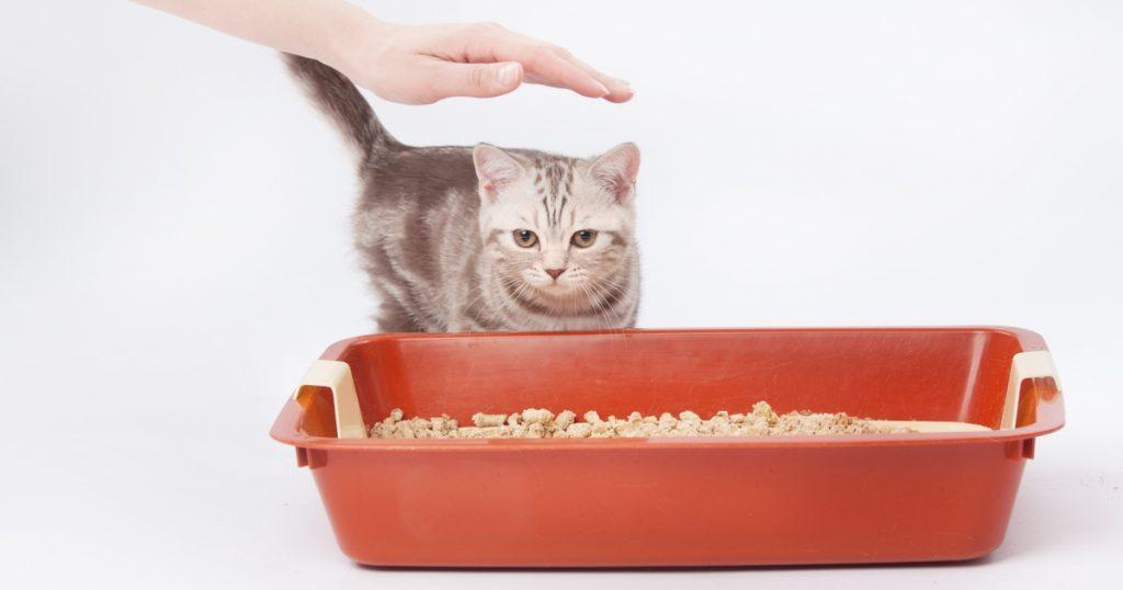 Котёнок в лотке.jpg