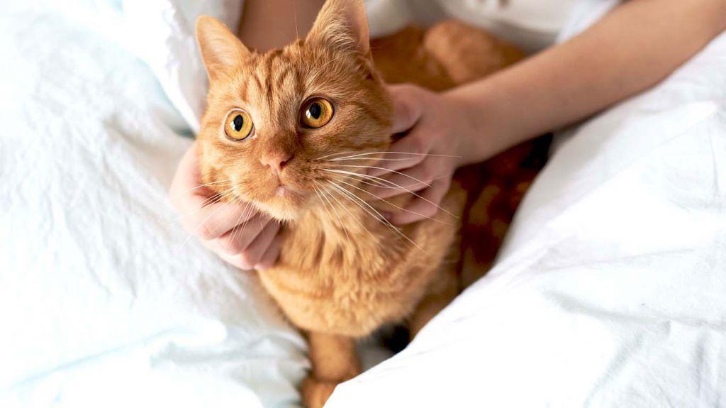 Диета после гепатита у кошек