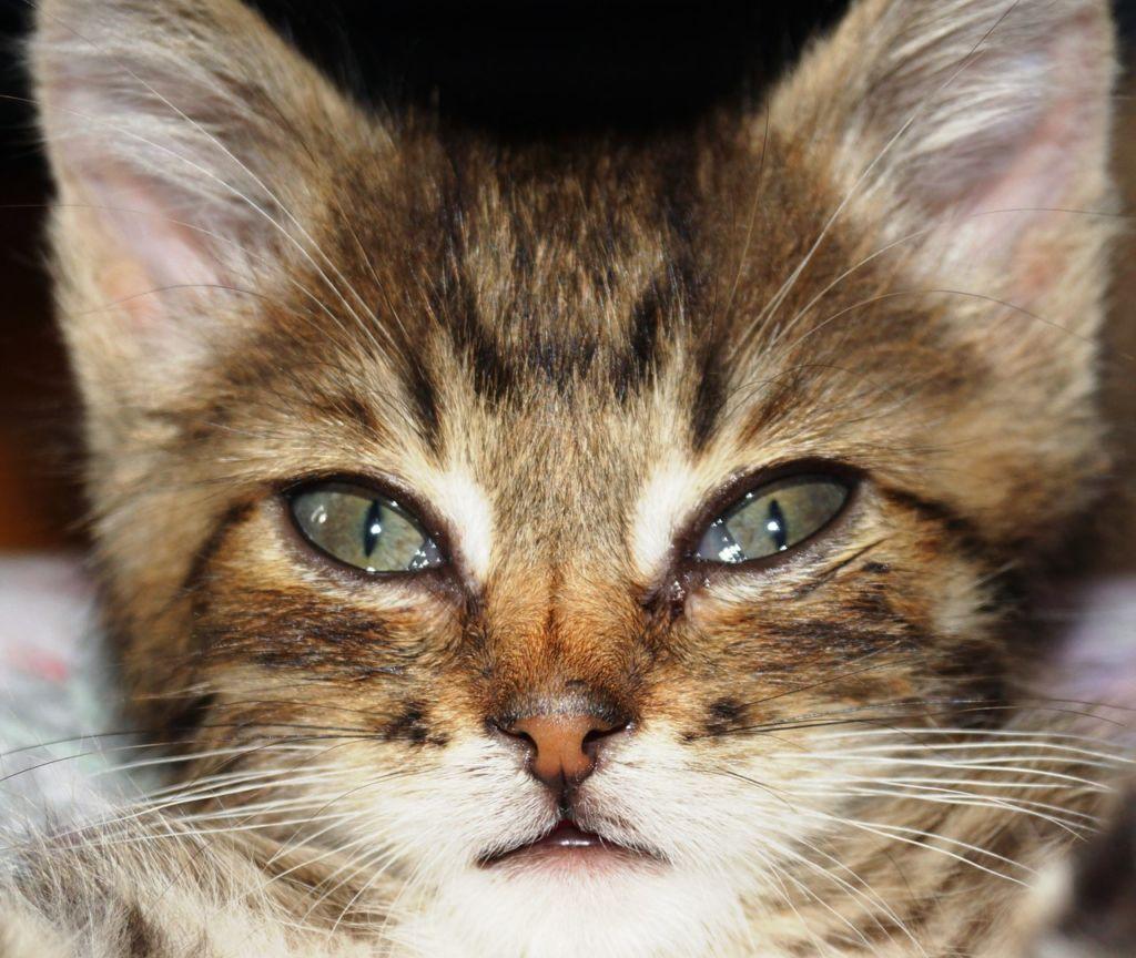 Слезится глаз у котенка третье веко thumbnail