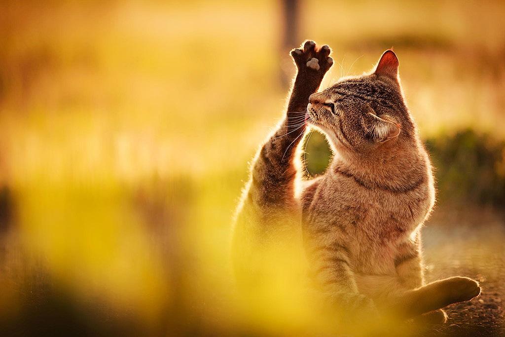 Амоксициллин для кошек при акне thumbnail