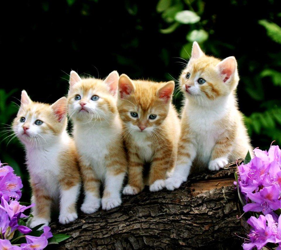 Глистная инвазия у котят часто заканчивается летальным исходом