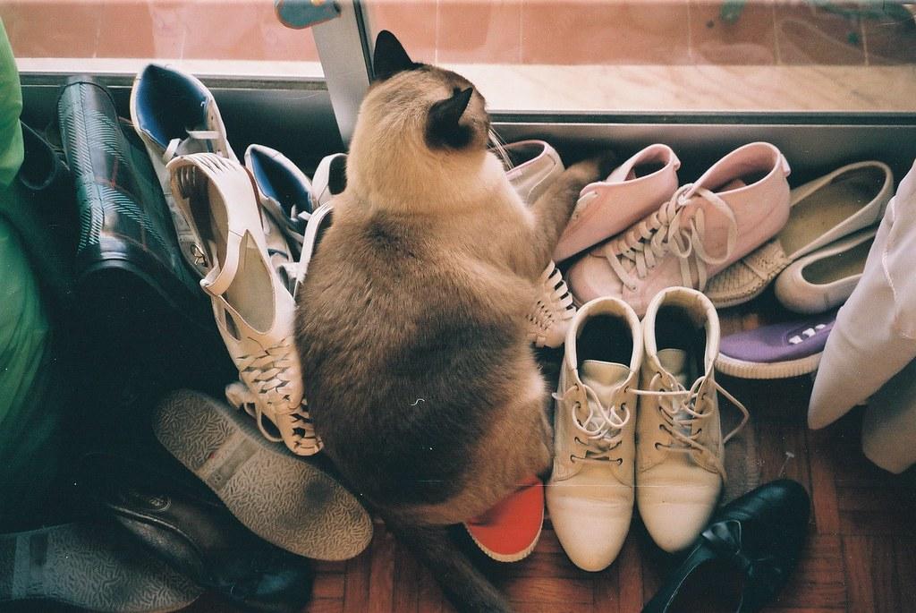 Земля на обуви может содержать яйца глистов, которыми заражается домашний котик