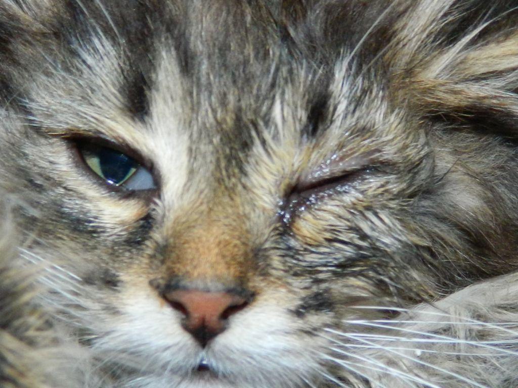 Чем лечить глаза кошке если они слезятся thumbnail