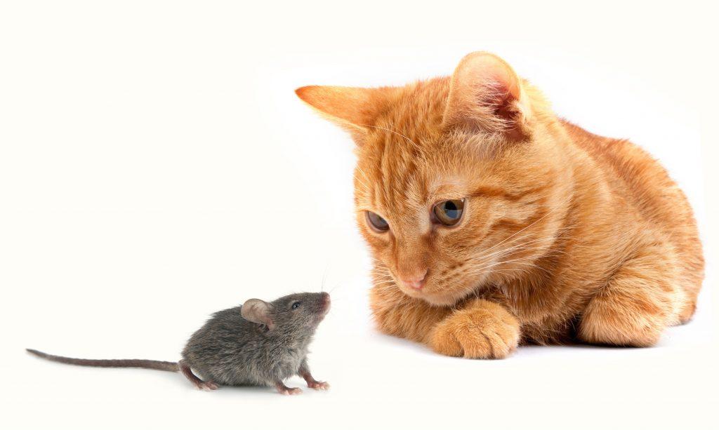 Кошка с мышкой.jpeg
