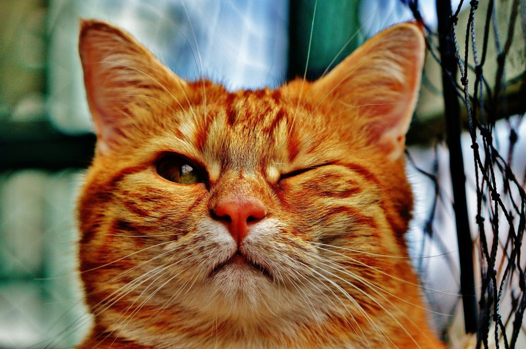 Одностроннее прищуривание – это повод показать котика врачу