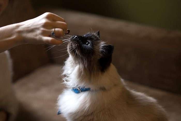 Угощаем любимых кошек мультивитаминными лакомствами, zooclub.ru