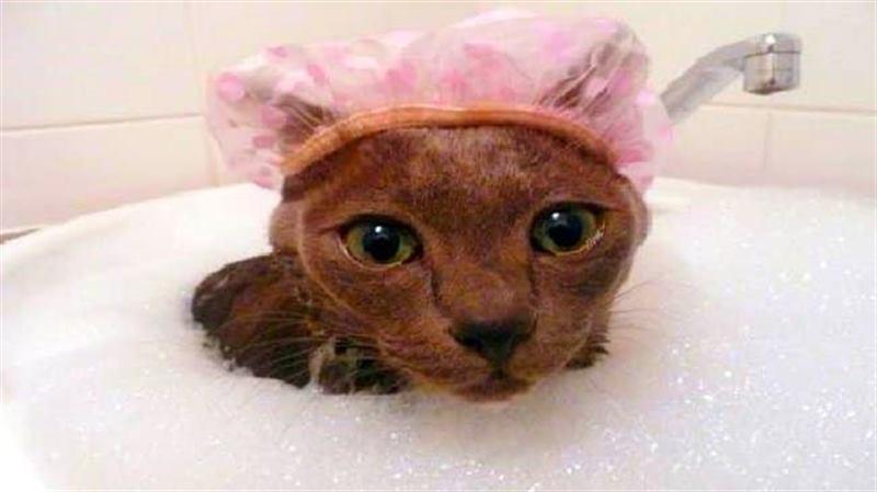 Шапочка на голове может защитить ушки кота во время купания