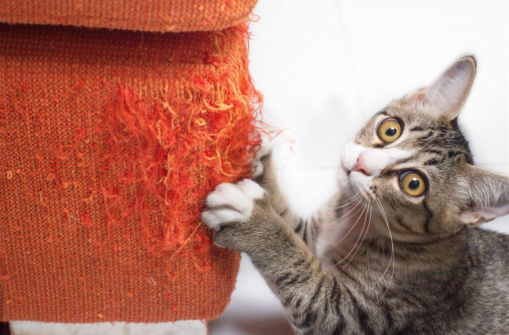 Зачем стричь когти кошке.jpg