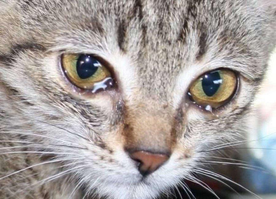 При естественном слезотечении зрачок адекватно реагирует на свет