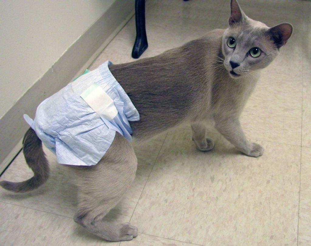 Цистит у кошек: 😿 симптомы и лечение в домашних условиях