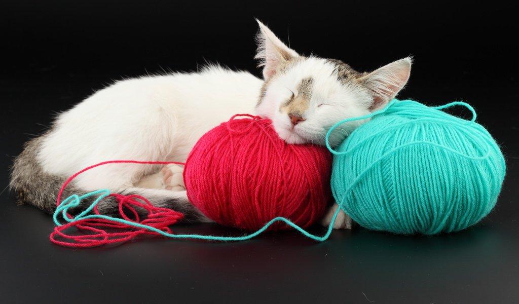 Кошка спит на клубках.jpg