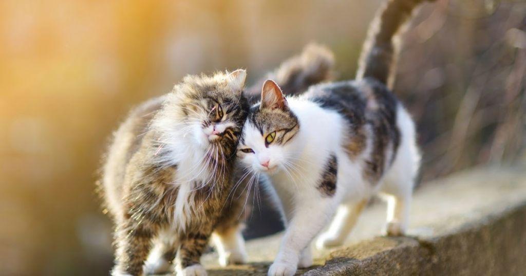 Две кошки.jpg
