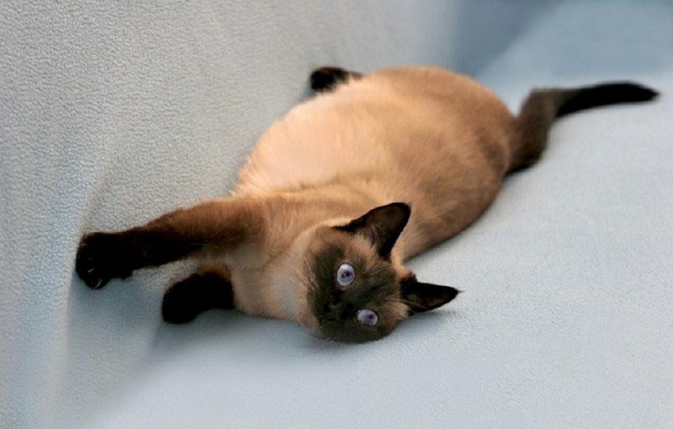 беременная кошка.jpg