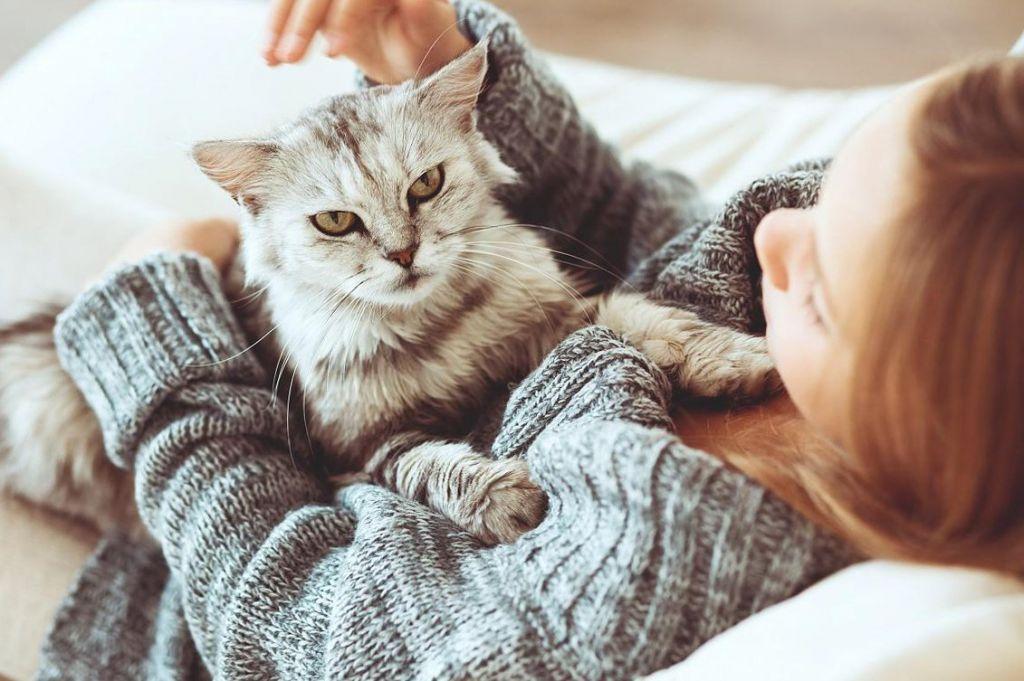 При поглаживании кошки яйца аскарид с шерсти могут попасть на руки человека
