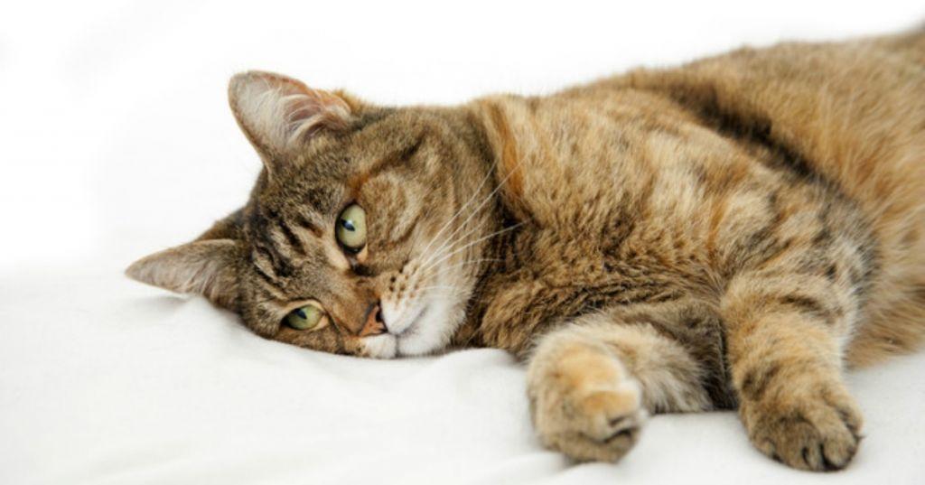 Понос у кошки симптомы и лечение.jpg