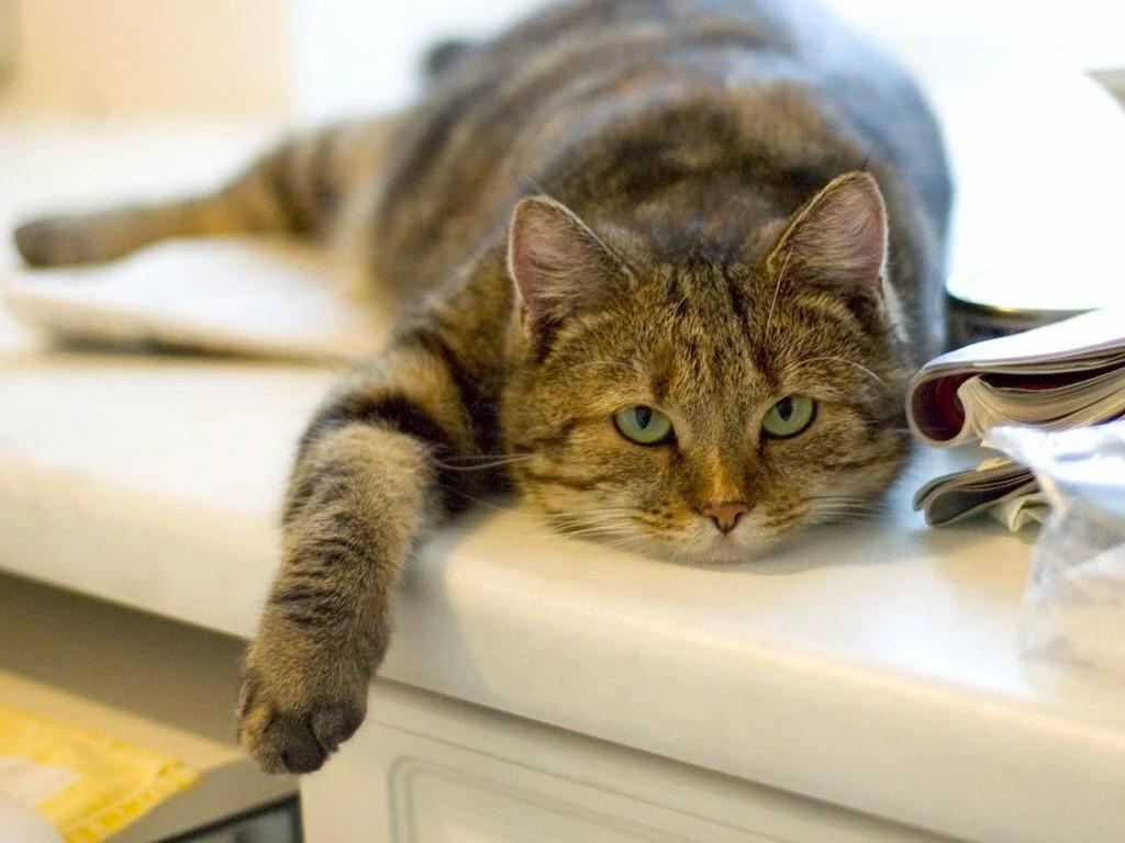 этом есть картинки кошек как они работают столовая мансардном помещении