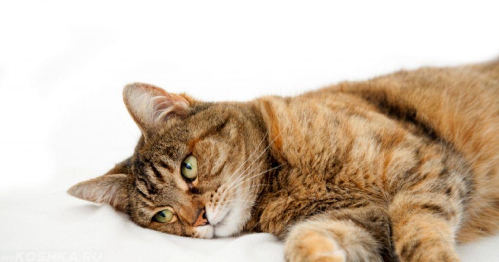Чем кормить кота во время рвоты thumbnail