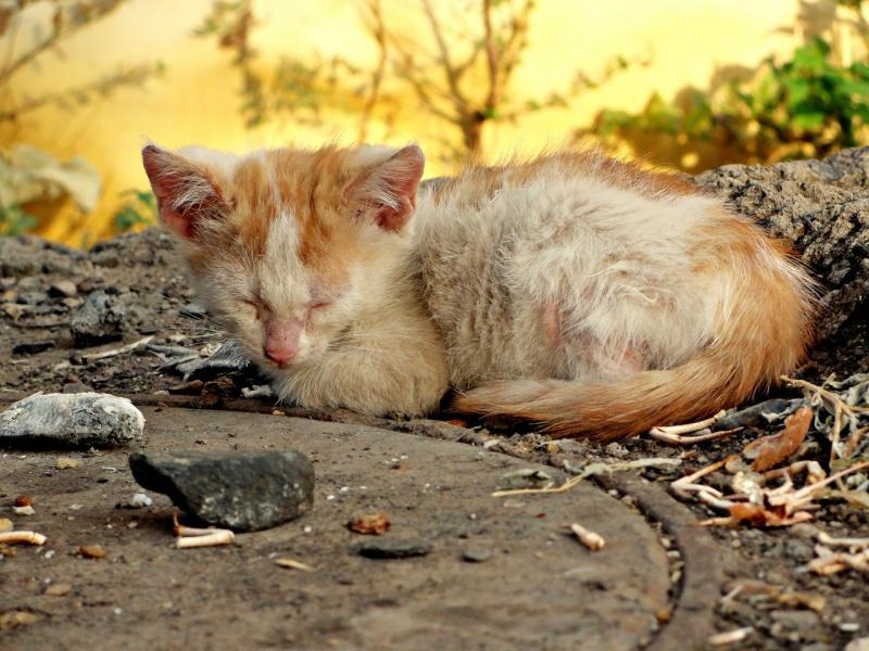 Общение с бездомными животными – фактор риска для домашней кошечки