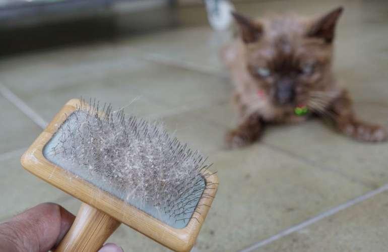 почему у кота перхоть в шерсти