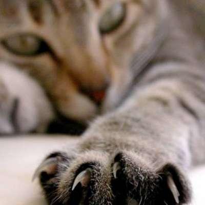 Как правильно подстричь когти коту и котенку