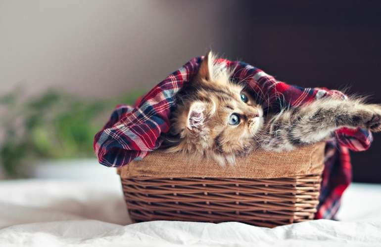 Чем кормить котенка 1,5 - 2 месяца