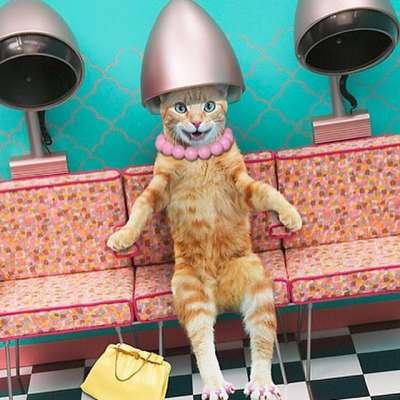 Селкирк Рекс кудрявая кошка Описание породы и уход за шерстью