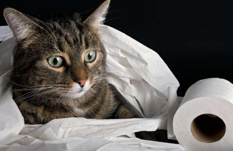 Понос у кошек и котов