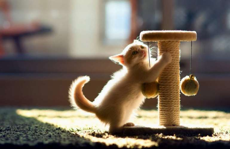 Выбираем когтеточку для кошки или делаем сами