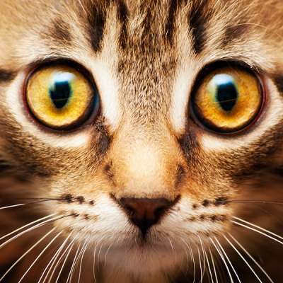 Лечение глазных болезней у кошек