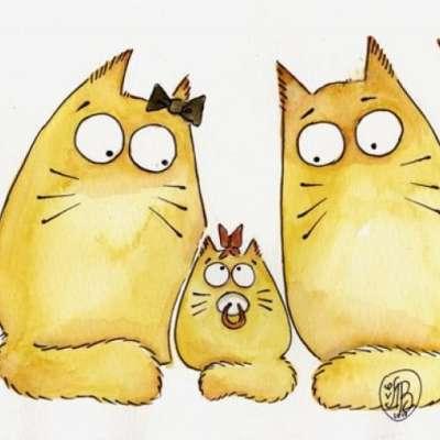 Кот или кошка как определить, выбрать, фото, кто лучше, как отличить и определить пол, примета, отзывы