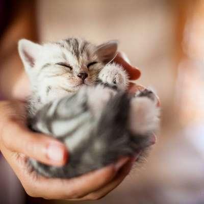 Сколько живут домашние и уличные кошки в зависимомсти от породы