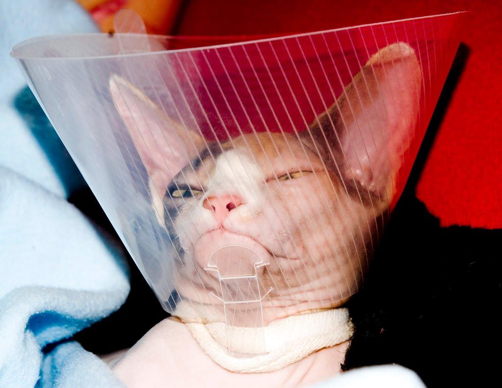 Кот в ветеринарном воротнике.jpg
