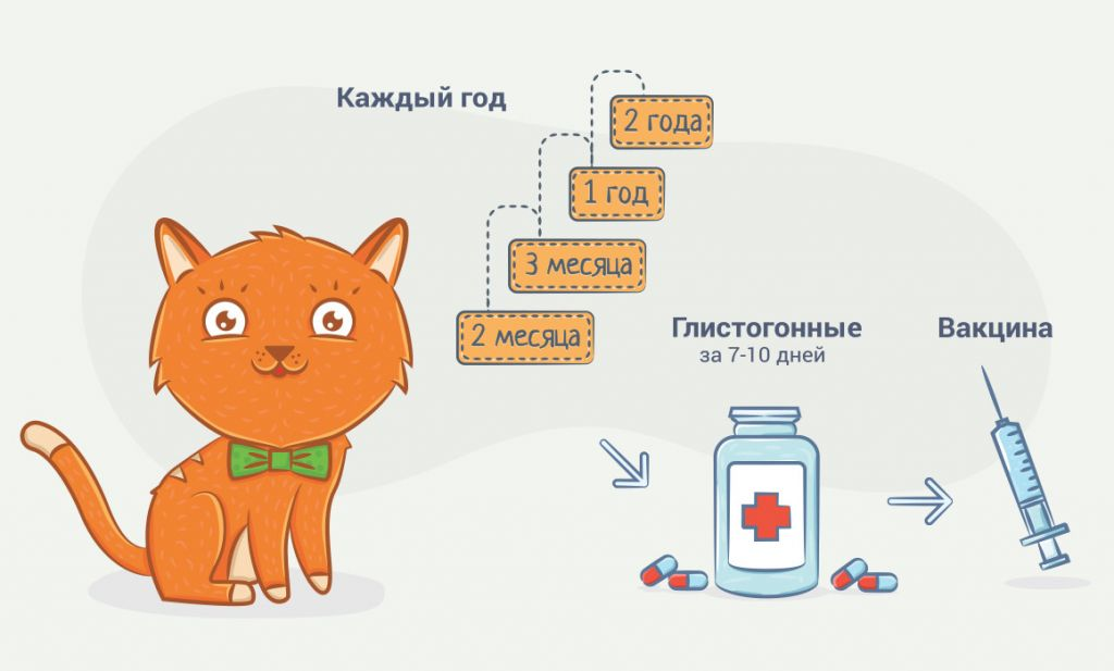 Схема дегельминтизации учитывает график прививок