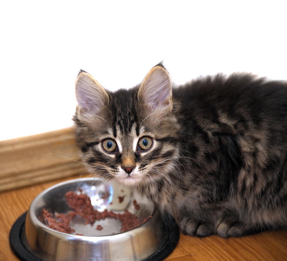 Кормление 2месячного котёнка натуральными продуктами.jpg
