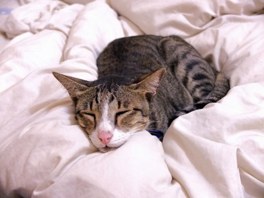 Если своевременно начать вводить кошке препарат Phosprenyl, то есть шанс помочь ей даже при тяжелом вирусном заболевании