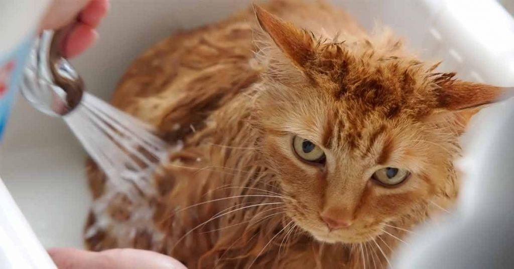 cat-bath-fb.jpg